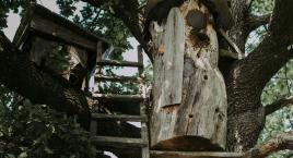 Смачні традиції, ремесла та обряди Рівненщини в сьогоденні: печена риба на соломі та бортництво